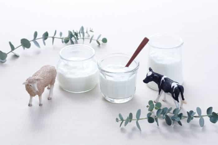 乳酸菌 効果的なとり方