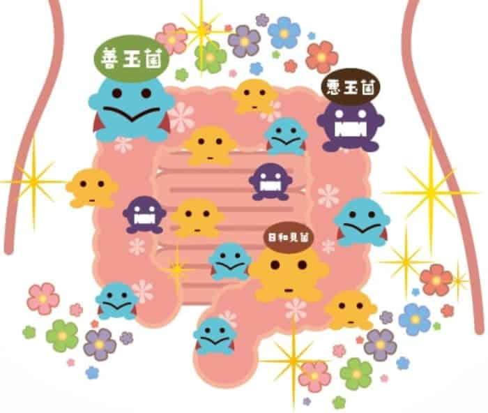 乳酸菌 種類 特徴